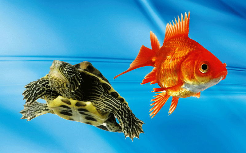 acquariologia co pro sem el